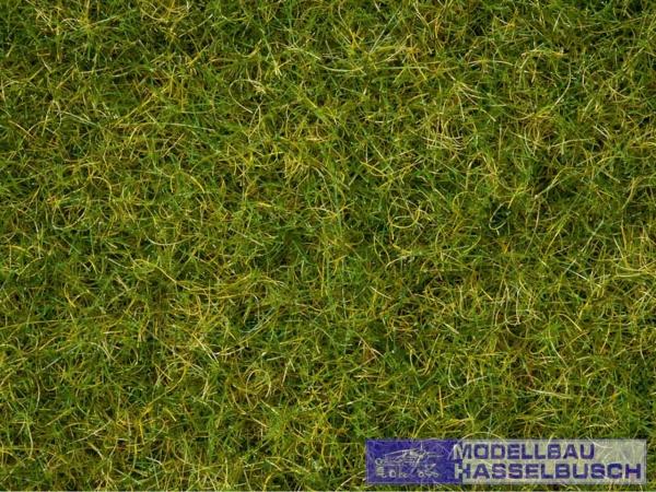 Master-Grasmischung Sommerwiese, 2,5 bis 6 mm