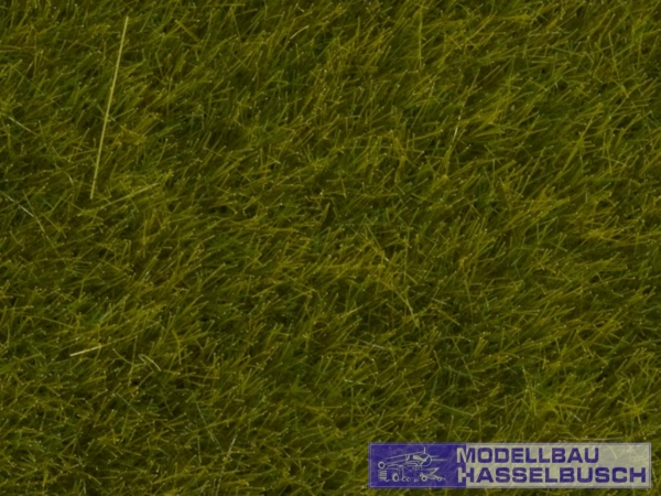 Wildgras Wiese, 6 mm